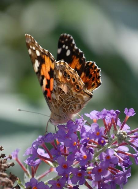 butterfly-372320_1920