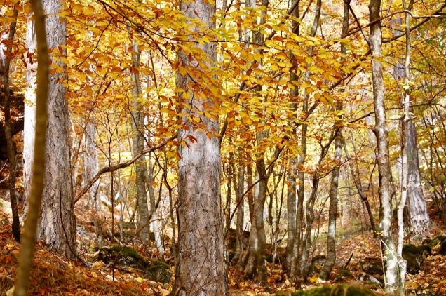forest-3591921_1280