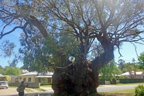 goldminer's tree (002)