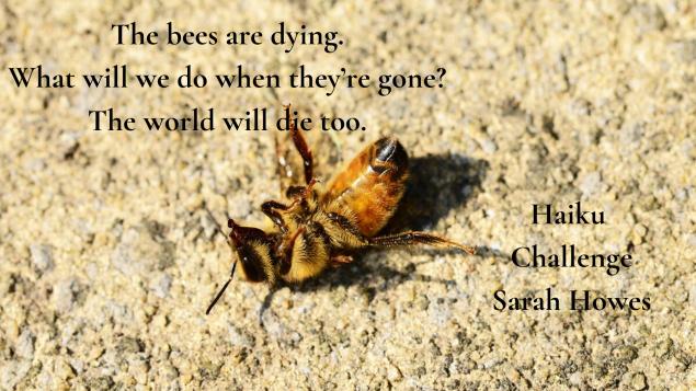 Haiku Challenge Sarah Howes